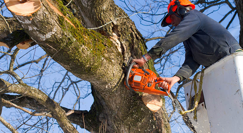 Is the task of tree removal is costly?