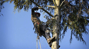 The Cost Involved in the Tree Removal Process