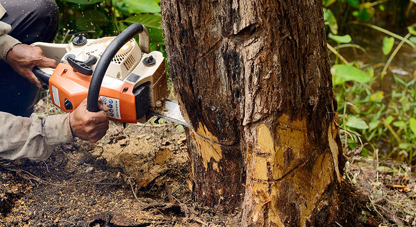 What are the most valuable tree services?